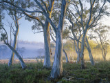 Snowgums at Navarre Plains, South of Lake St Clair Fotografisk tryk af Rob Blakers