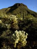 Flora on Hillside of Tucson Mountain Park Fotografisk tryk af Mark Newman