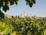 Towers of San Gimignano with Grapevines Producing Vernaccia Di San Gimignano Wine in Foreground Lámina fotográfica por Olivier Cirendini