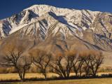 Mt Tom in Sierra Nevada in Winter from Round Valley Near Bishop Fotografie-Druck von Witold Skrypczak