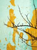 Detail of Tree Branch Against Wall with Peeling Paint Reproduction photographique par Rachel Lewis