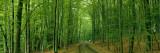 Forest Road Near Limburg, Germany Veggoverføringsbilde av Panoramic Images,