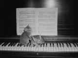 Two Kittens Sitting on Piano Keyboard By Sheet Music Photographic Print by George Marks