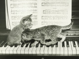 Two Kitten Playing on Piano Keyboard Reproduction photographique par George Marks