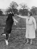Perfrorming Goat Impressão fotográfica