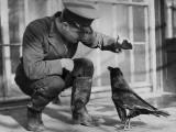 Corbeau Reproduction photographique