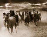 Running Horses Print by Monte Nagler