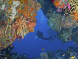 Diver Inspects Reef, Raja Ampat, Papua, Indonesia Fotografisk trykk av  Jones-Shimlock