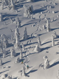 Skiing Through the Snowghosts at Whitefish Mountain Resort, Montana, USA Reproduction photographique par Chuck Haney
