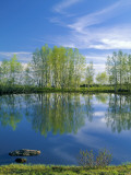 Pond Reflects Aspen & Cirrus Clouds at Sunrise on Steens Mountain, Oregon, USA Photographic Print by Scott T. Smith