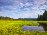 Bass Harbor Marsh in Acadia National Park, Maine, USA Photographic Print by Chuck Haney