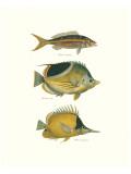 Tropical Fish I Exklusivt gicléetryck av Georges Cuvier