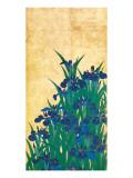 Irises, Japanese Stampa giclée premium di Ogata Korin