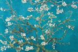 Rami di mandorlo in fiore, San Remy, 1890 Stampe di Vincent van Gogh