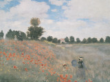 Wild Poppies, Near Argenteuil Posters por Claude Monet