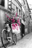 Fleurs roses Posters