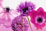 Lila Blumen Kunstdrucke
