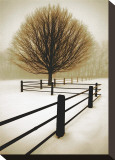 Solitude Stretched Canvas Print by David Winston