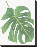 Philodendron II Stretched Canvas Print by Jenny Kraft