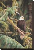 Silent Sentinel Alaska Impressão em tela esticada por Art Wolfe