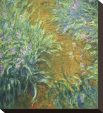 The Path in the Iris Garden Stretched Canvas Print by Claude Monet
