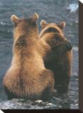 Dos cachorros de oso Reproducción de lámina sobre lienzo por Art Wolfe