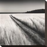 Oceanside Field Impressão em tela esticada por Andrew Ren