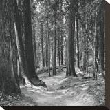 Mountain Hike Impressão em tela esticada por Erin Clark