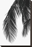 Palms, no. 5 Stretched Canvas Print by Jamie Kingham