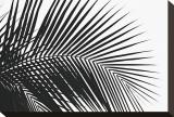 Palms, no. 10 Bedruckte aufgespannte Leinwand von Jamie Kingham