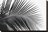 Palms, no. 10 Stretched Canvas Print by Jamie Kingham