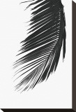 Palms, no. 8 Stretched Canvas Print by Jamie Kingham