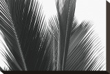 Palms, no. 15 Stretched Canvas Print by Jamie Kingham