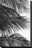 Palms, no. 4 Stretched Canvas Print by Jamie Kingham