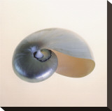 Polished Nautilus Toile tendue sur châssis par Tom Artin