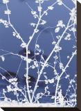 Autumn Branch (blue) Stretched Canvas Print by Jenny Kraft