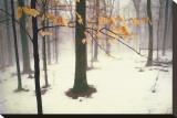 Quiet Woods Reproducción de lámina sobre lienzo por David Winston