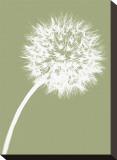 Dandelion Tilt (khaki) Stretched Canvas Print by Jenny Kraft