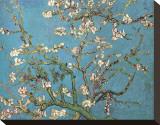 Mandelgrenar i blom, San Remy, ca 1890 Sträckt kanvastryck av Vincent van Gogh