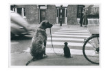 Dog Walking Dog  France