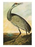 Sandhill Crane Poster di John James Audubon