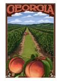Georgia - Peach Orchard Scene Prints by  Lantern Press
