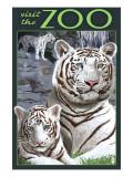 Visit the Zoo - White Tiger Family Plakater af  Lantern Press
