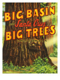 Santa Cruz, California - Big Trees Park, Big Basin Letters Póster por  Lantern Press
