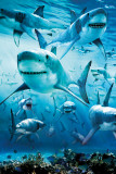 Shark Infested Poster