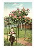 Girl Standing by Rose Trees, Portland, Oregon Láminas