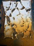 Edgefish Photographic Print by Craig Satterlee
