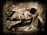 Equas Caballus Fotografie-Druck von Clive Nolan