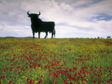 Bull Statue, Toros De Osborne, Andalucia, Spain Photographic Print by Gavin Hellier
