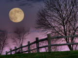 Ont Lámina fotográfica por Jim Crotty